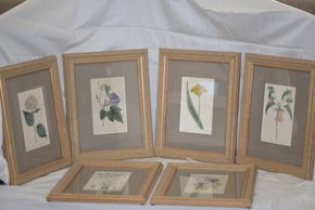 Lot 008 Lot of 6 Framed Flower Prints Description of The Flower Located on Back of The Frame 8H x 5W PICK UP IN CENTERPORT