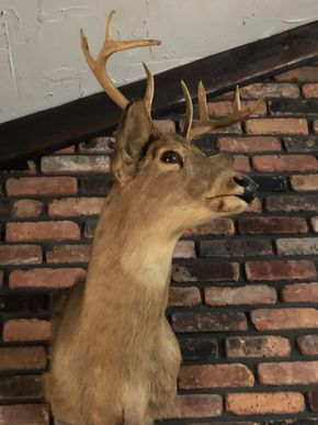 Lot 003 PU 8 Point Mounted Taxidermy Deer Head PICK UP IN EAST MEADOW